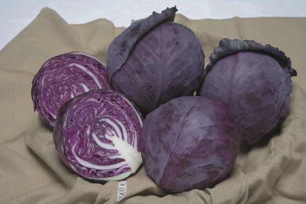 Rotkohl F1 Ruby Perfection