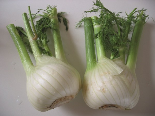Fenchel Fino (Knollenfenchel)